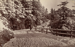 The cart-road, Winter [Simla].